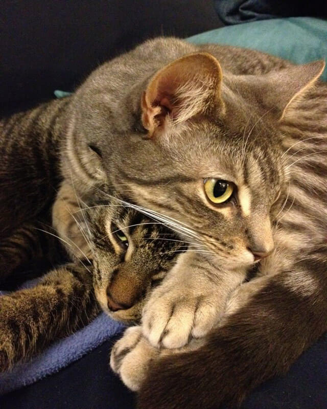 Oscar and Milo